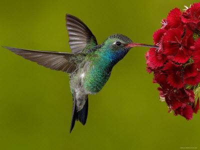 Un colibrí y toda una gama de colores.
